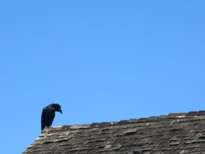 close roof raven