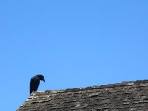 close roof raven